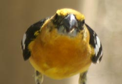 Bird up close