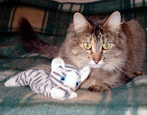 Eric the Cat Travel Bug with Squirrel