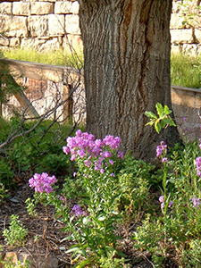 Fireweed and Tree