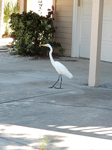 Heron at garage